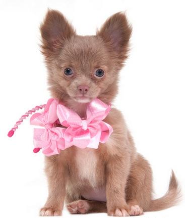 Sweet little dog seems to wonder: