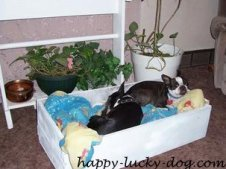 small dog pictures, Dolly and Daffy