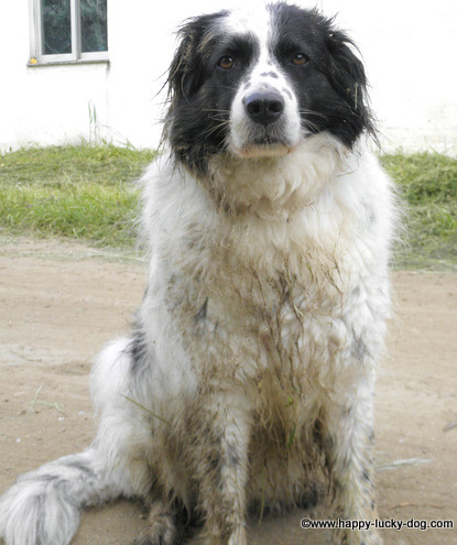 That's my lovely dog, Roza, all covered in mud.The serious face is because she realized I was going to give her a bath the moment we returned home.