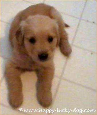 Puppy photo of Gracie