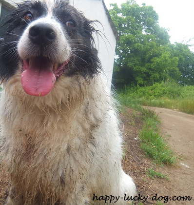 My dog being happy (and muddy) after having spent the morning playing outside!
