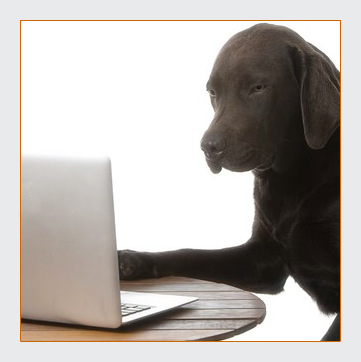 Serious looking black dog searching the internet