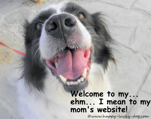 My dog has been my inspiration for building this site.