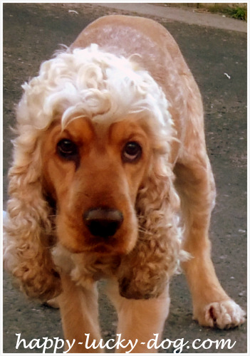 Funny dog photos, funny haircut1