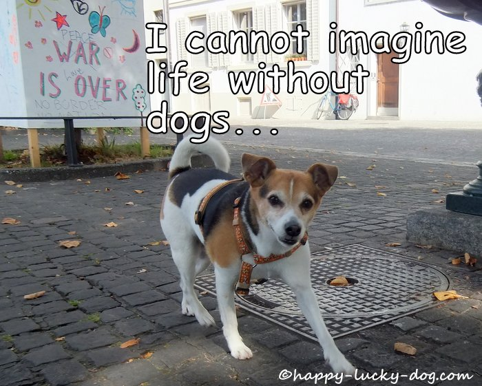 Small dog photo with quotation