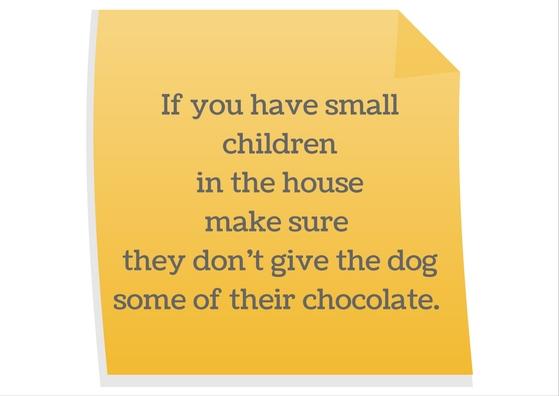 Keep dogs away from chocolate