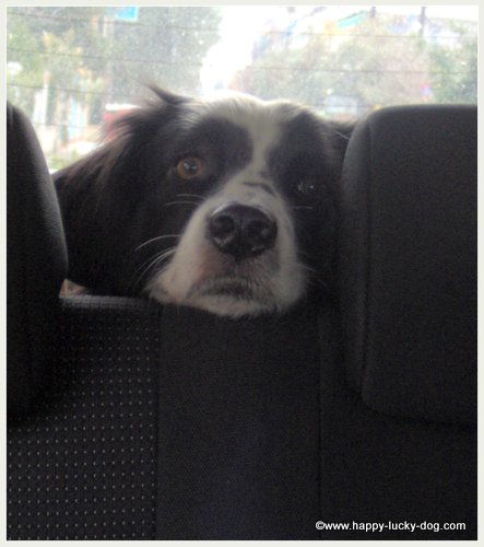 My dog loves going for car rides.