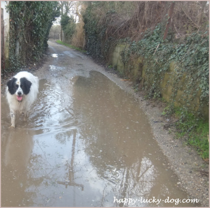 Roza jumped in the puddle. And she loved it. Me? Not that much!