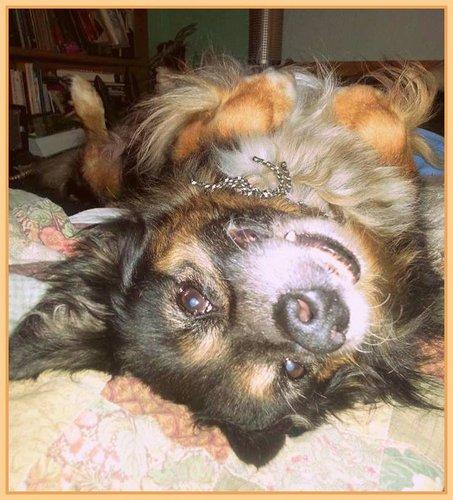 cute dog photos Ozzy
