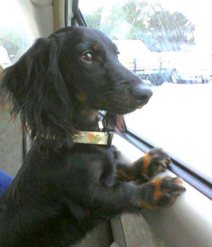 cute dog photos_Pluto