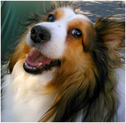 cute dog photos Dewey