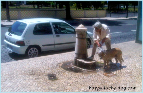 Helping dog with heat stroke symptoms.