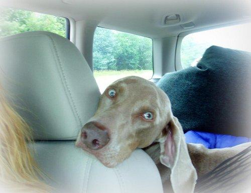 cute dog photos Rocky