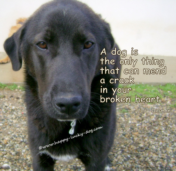 Sweet big black dog,Judi Desmond quote