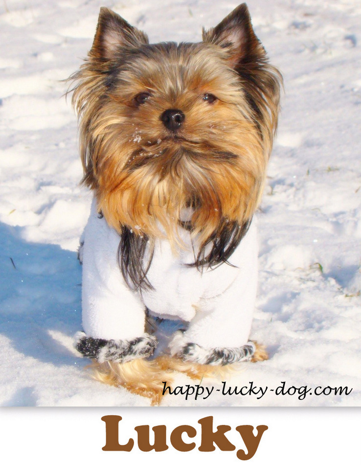 Stylish small dog wearing his winter coat