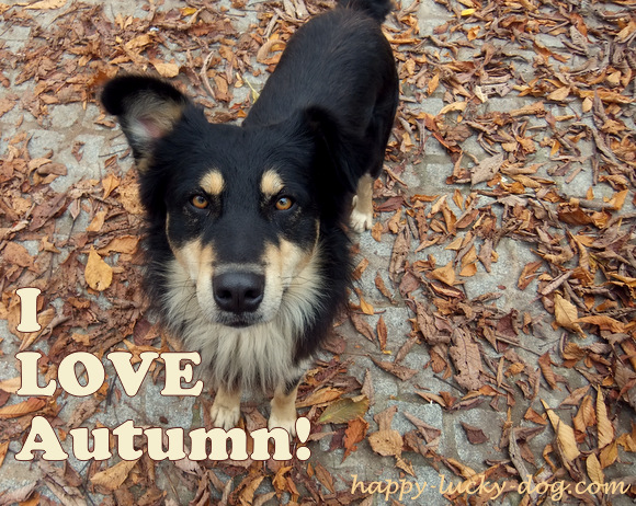 Black and tan dog sitting on autumn leaves