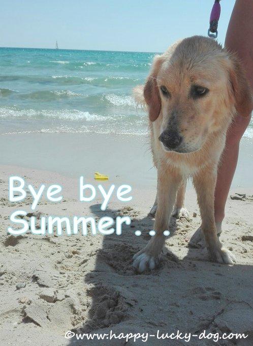 Happy dog enjoying last day of summer tat the beach