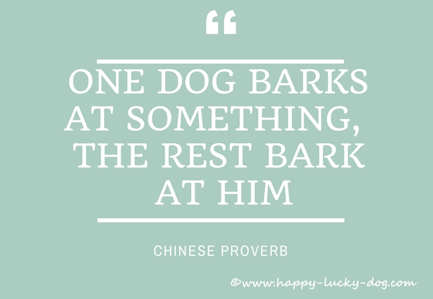 Chinese dog proverb
