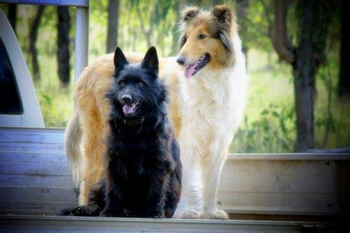 cute dog photos two beautiful dogs