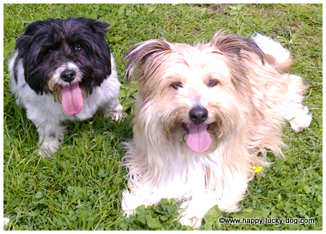 Cute small dogs, happy faces