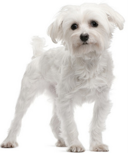 Big Names For Small Female Dogs