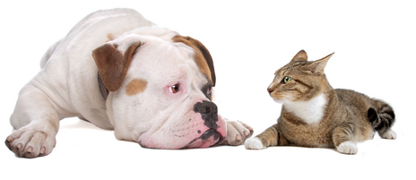 Dog and cat looking at each other.