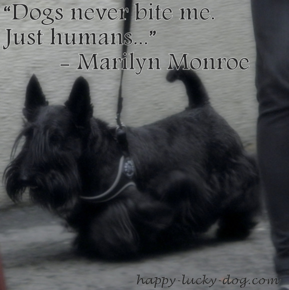 Marilyn Monroe quote about dogs