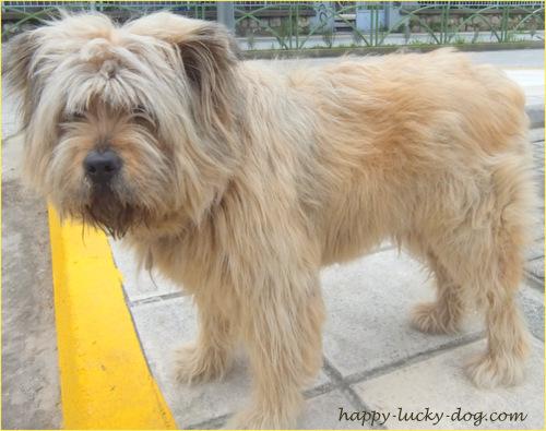Fluffy dog friend named Cinnamon