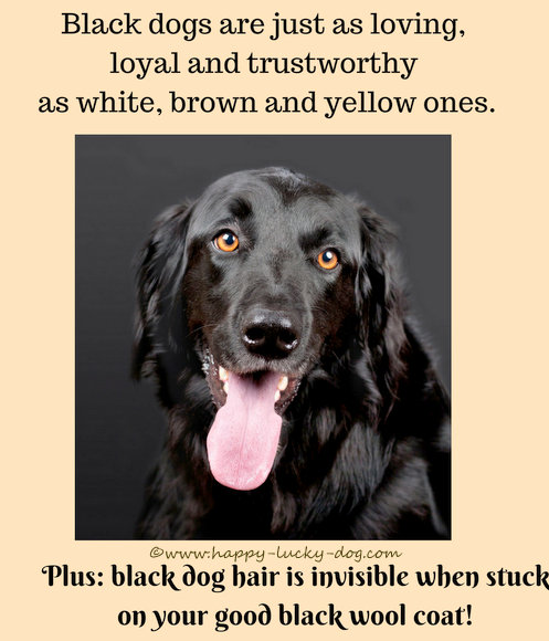 Owning a black dog has unexpected benefits