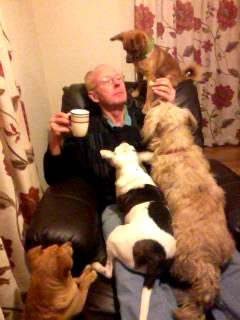 Funny dog photos, dogs begging for food