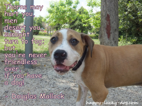 Dog picture with Douglas Mallock dog quote.