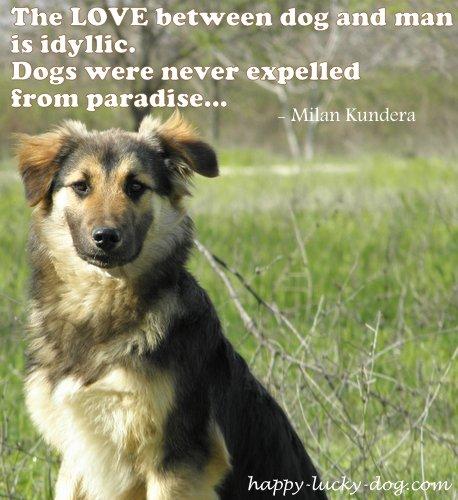 Millan Kundera's dog quote