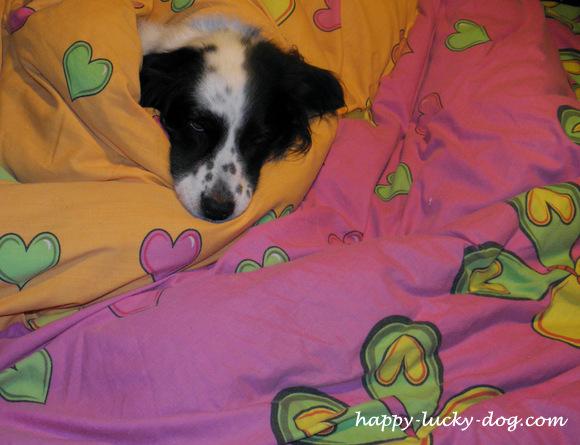 Enjoying Sunday Morning under covers...