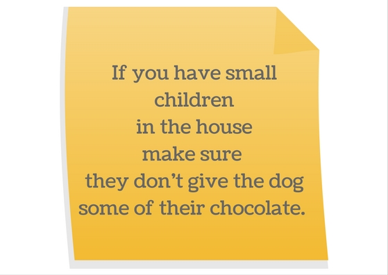 Keep dogs away from chocolate
