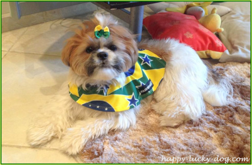 Cute small doggie from Brasil watching World Cup 2014