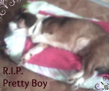 Preety Boy