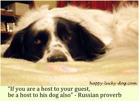 Russian dog proverb