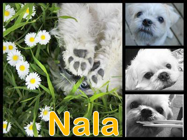 Nala makes a perfect name for a small dog