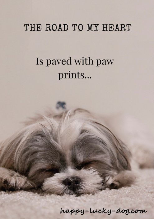Dog quotation