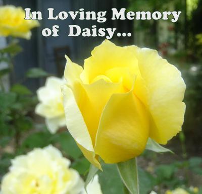 R.I.P Daisy...