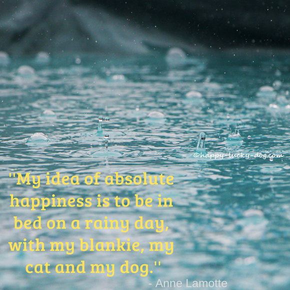Anne Lamotte's quote about dogs and rainy days