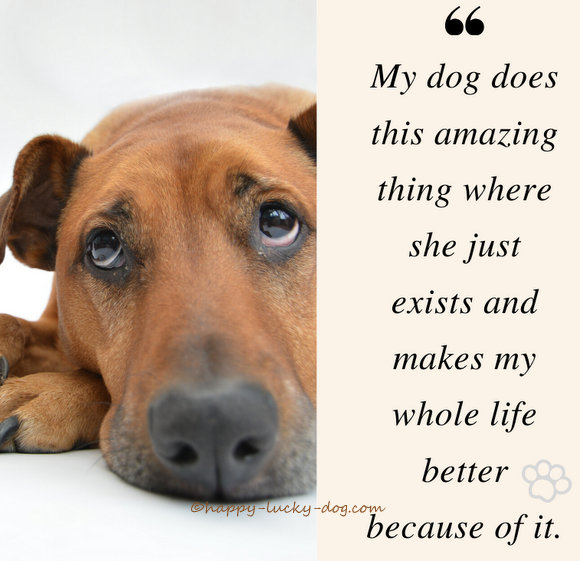 Dog with soulful eyes,quote about better life