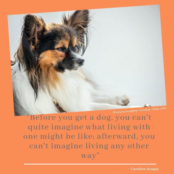 Famous dog quotations by Caroline-Knapp