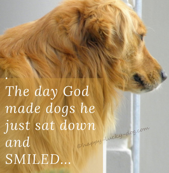 Picture of dog's profile with quote