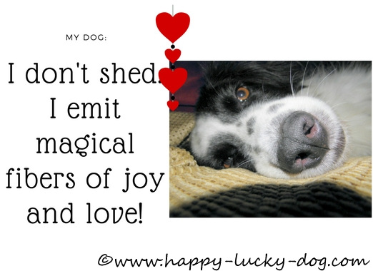 My dog emits love