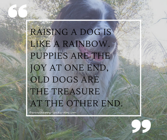 Photo of my dog with quote about puppies and senior dogs