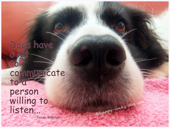 Dog photo with Susan Butcher quotation
