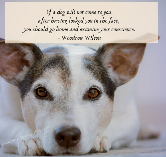 Cute dog photo with Woodrow Wilson's famous dog quotation