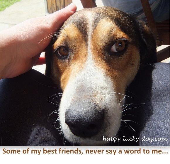 Sweet dog with soulful eyes