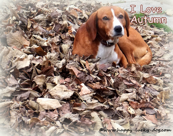 Cute dog sitting on Autumn leaves